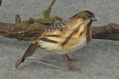 Partridge/quail thumbnail